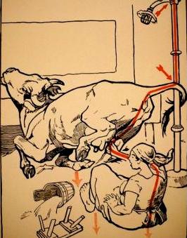 Las vacas conducen la electricidad